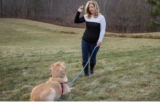 Your Canine's Behavior and Dog Behavior training Training