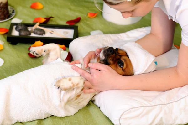 Massage For Dogs – Which Dogs Benefit?