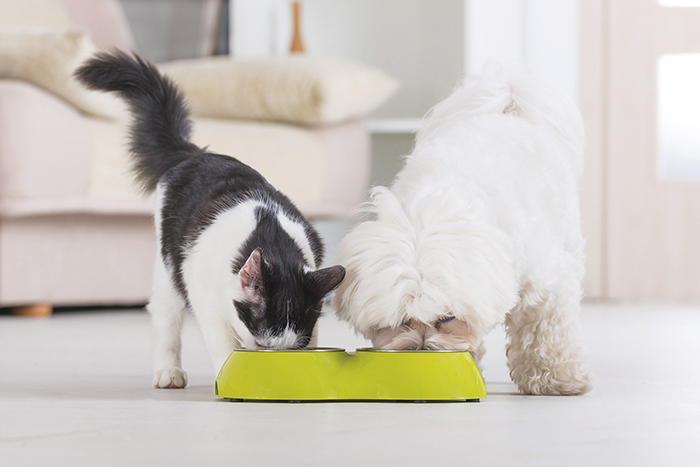 Knowing Safe And Healthy Pets Foods