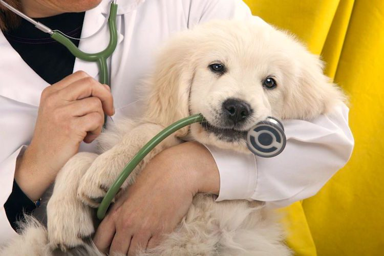In The Event You Buy Veterinary Insurance For Your Pet?