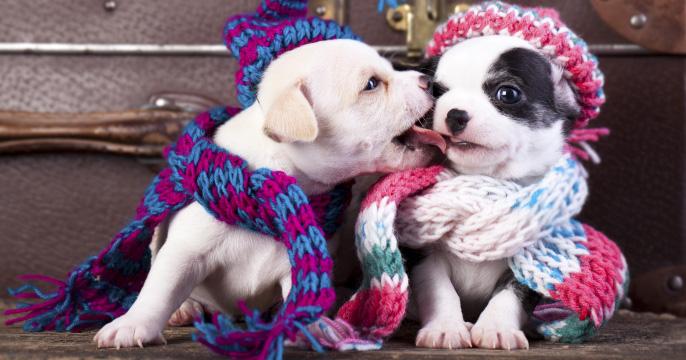 Cold Temperature Pet Care Tips