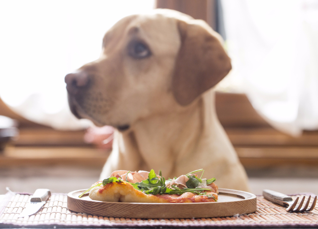 How you can Select Healthy Commercial Dog Food