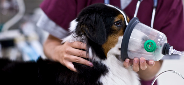 Strategies for Purchasing the Best Veterinary Equipment