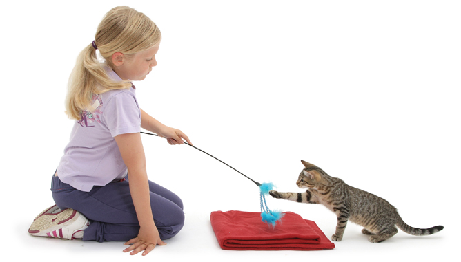 Improve Your Cat's Behavior Issues With the entire Cat Training System