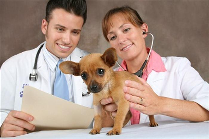 For Those Who Have a dog, You'll Need Pet Plan Insurance For Your Pet