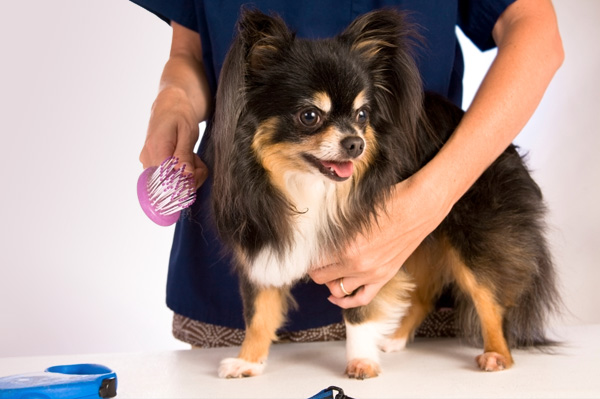 Grooming A Dog Tips and Supplies For The Canine Companion