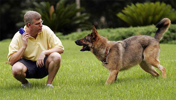 Pet Training Guidelines to help you Train Your Young puppies