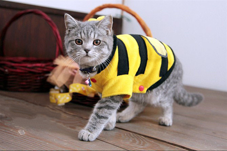 The Very Best Clothing For The Cat