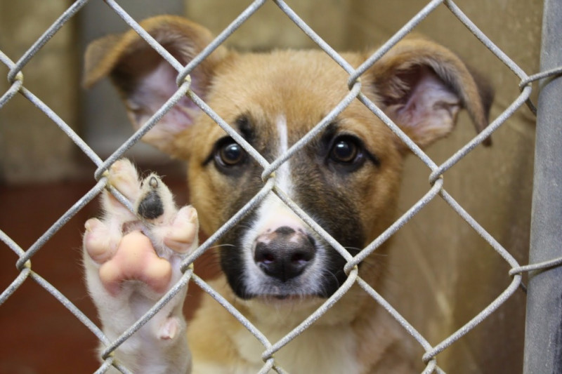 Adopting From your Pet Shelter