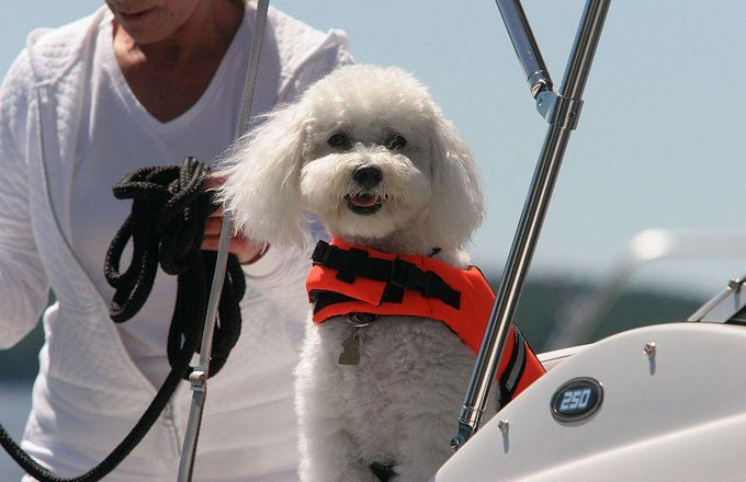 How to handle Pets During Vacation