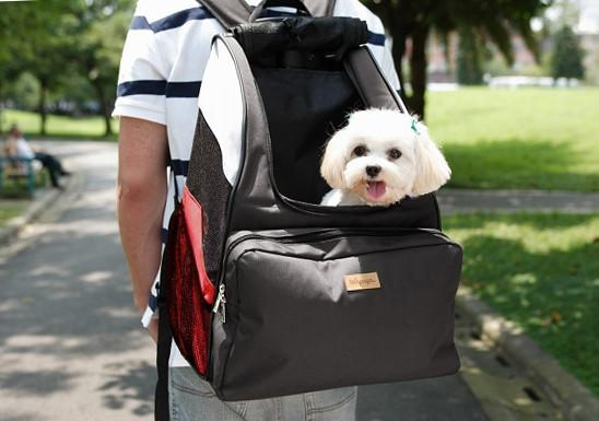 Comparing The Best Pet Carriers – 7 Tips For Quick Shopping