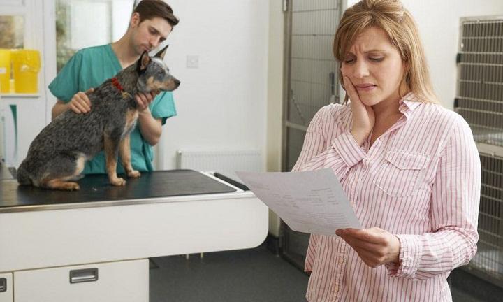 Avoid High Vet Bills by Purchasing Pet Insurance