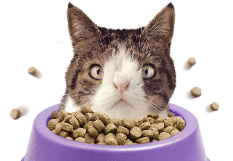 How Good Is Soulistic Cat Food? Find More Details Here!