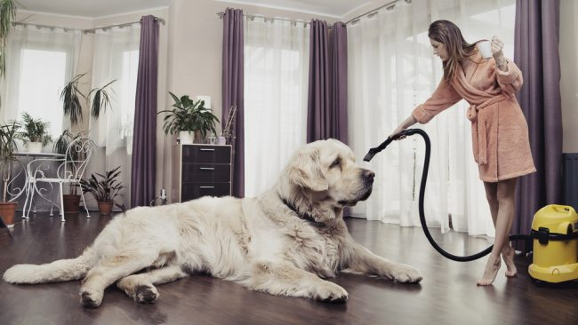 Vacuum Buying Guide for Pet Owners