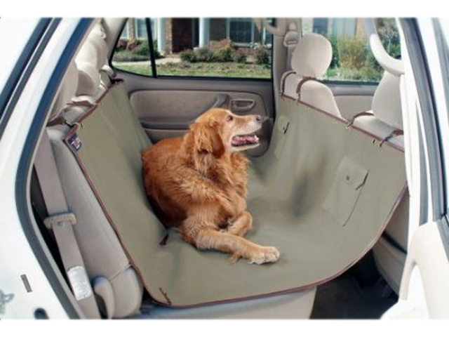 Pet Moving Company to Make the Task Simple