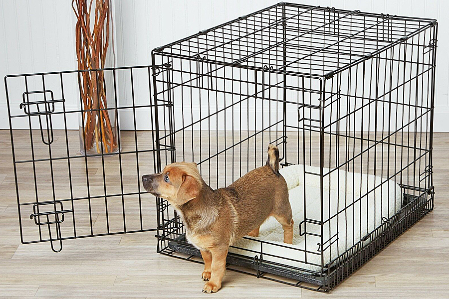 Buying a New Kennel – What You Need to Know