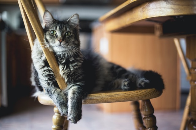 A cat sitting in a chair