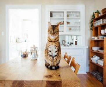 A cat sitting on a table