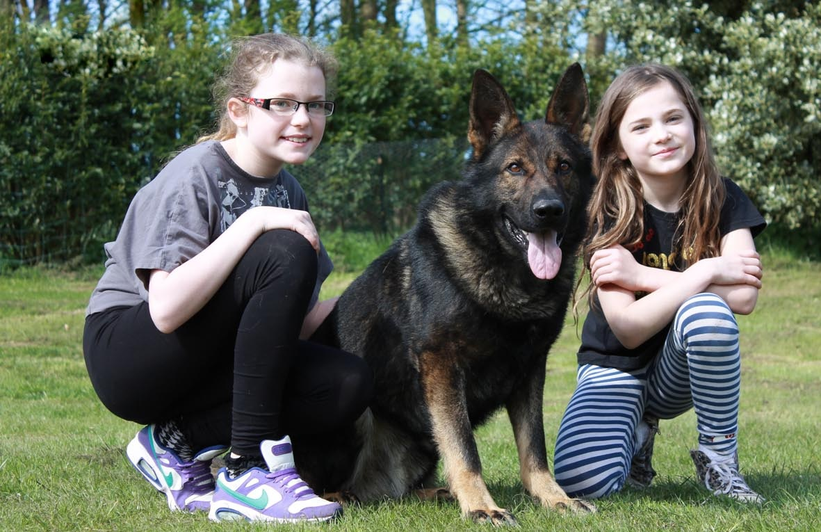 Best family protection dogs