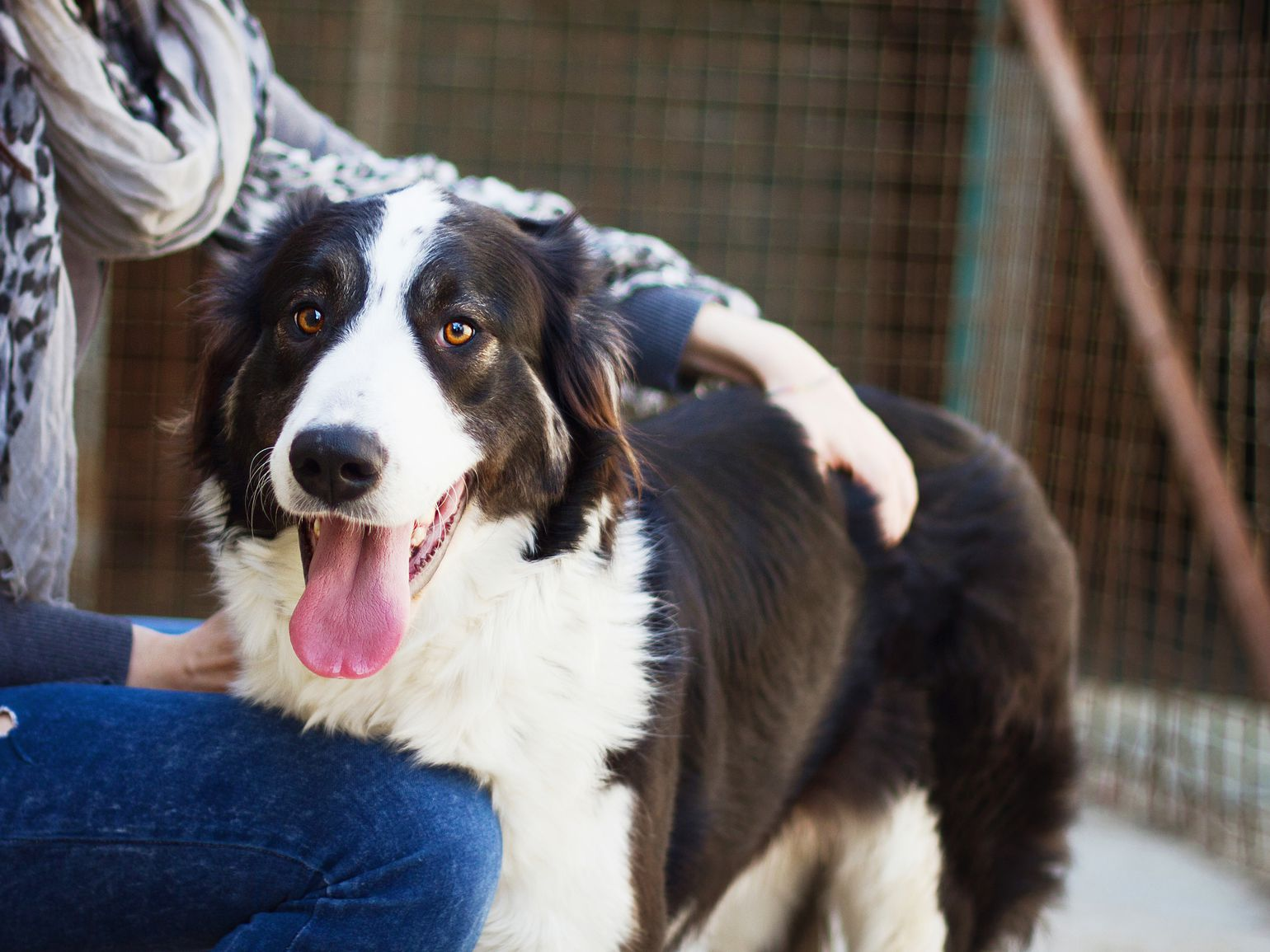 Fostering a Dog 101: All You Need to Know