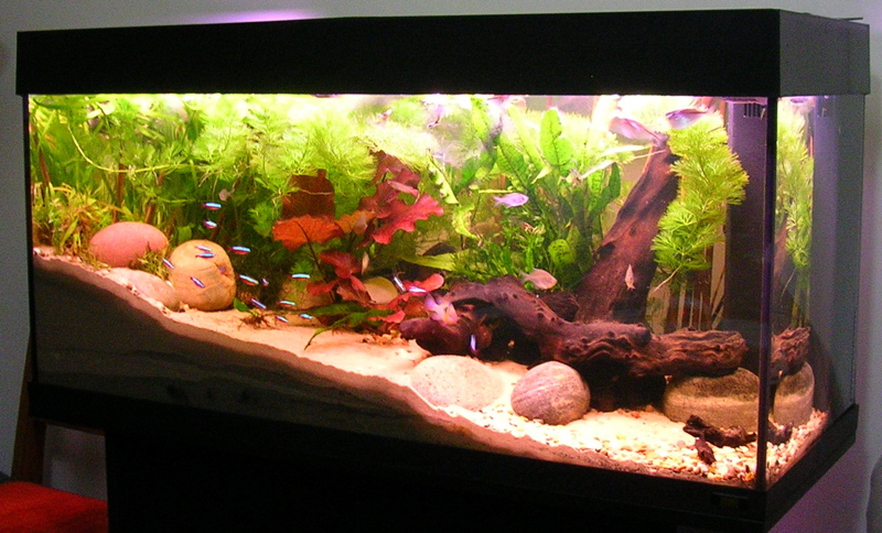 Why do people get aquariums at their homes?