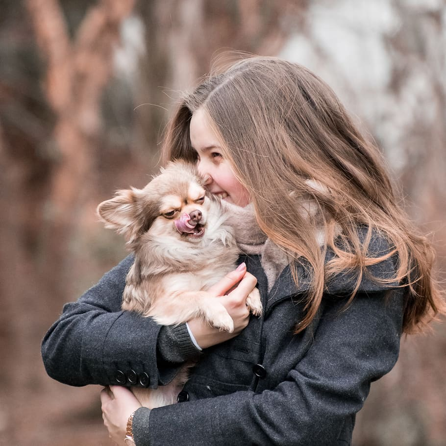 We All Love Dogs, But If You're Struggling with Training Yours, Read This Article