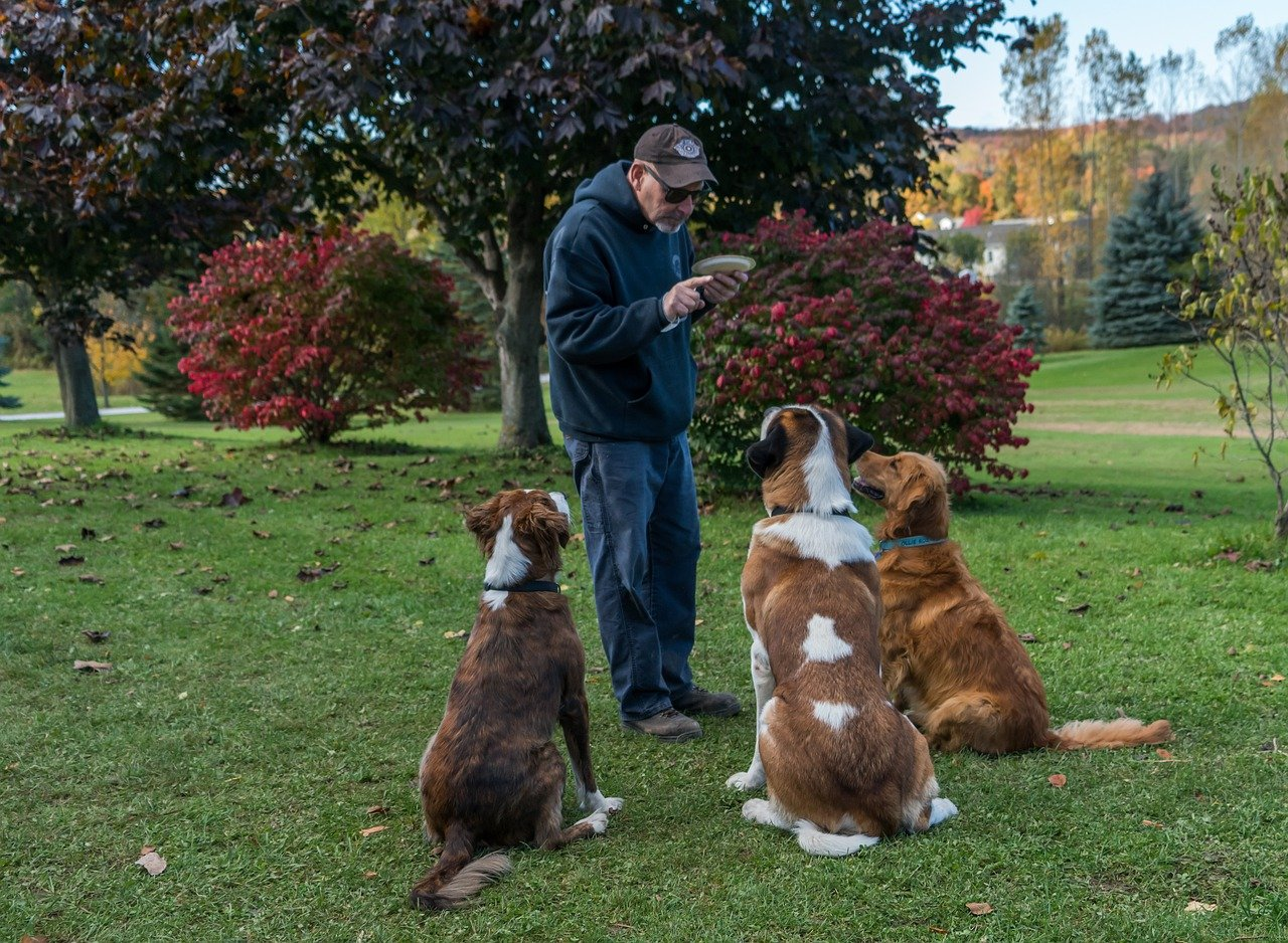 In-Home Dog Training vs Going to Class: What's the Difference?