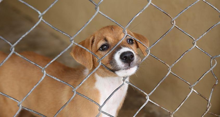 What Do Dog Rescue Groups Do?