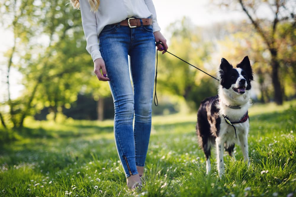 Save A Dog's Life, Adopt!